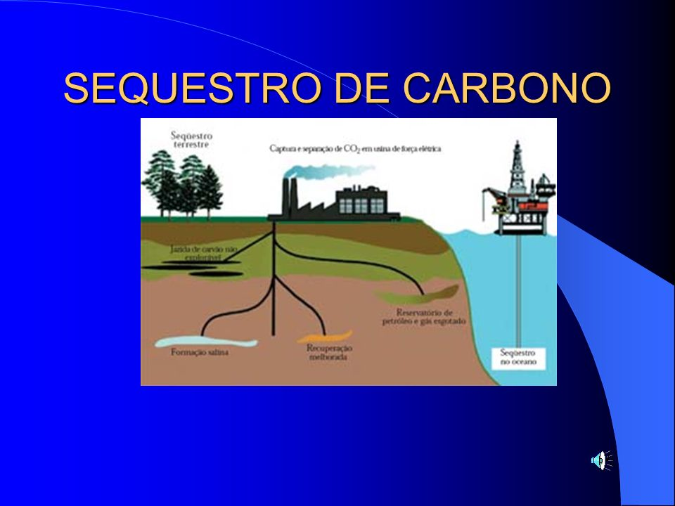 SEQUESTRO DE CARBONO