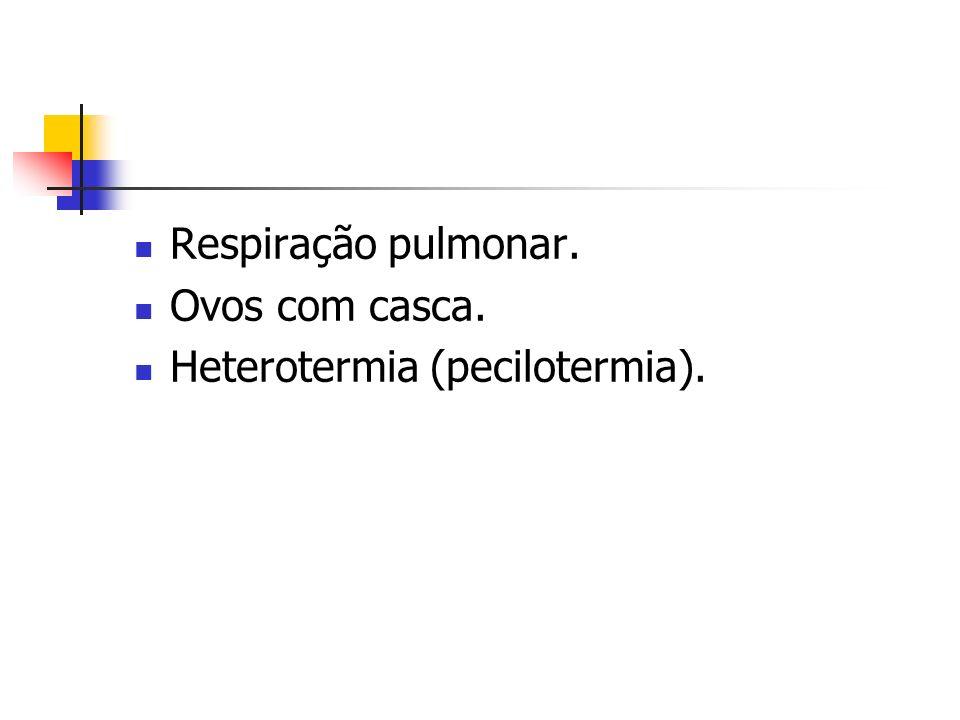 Respiração pulmonar. Ovos com casca. Heterotermia (pecilotermia).