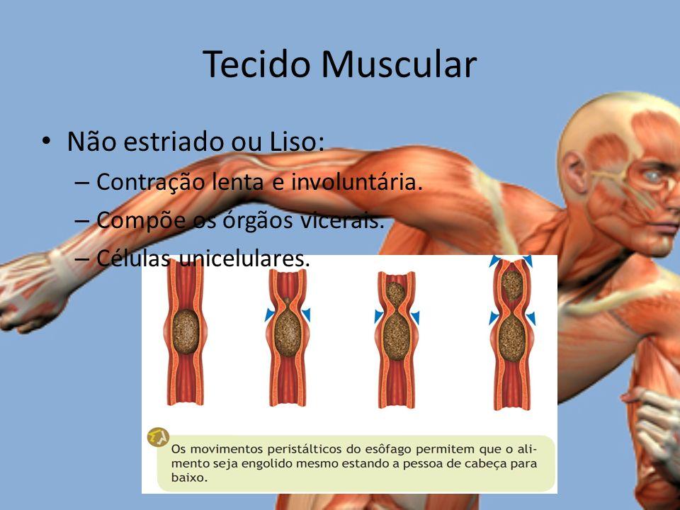 Tecido Muscular Não estriado ou Liso: Contração lenta e involuntária.