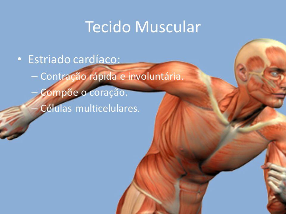 Tecido Muscular Estriado cardíaco: Contração rápida e involuntária.