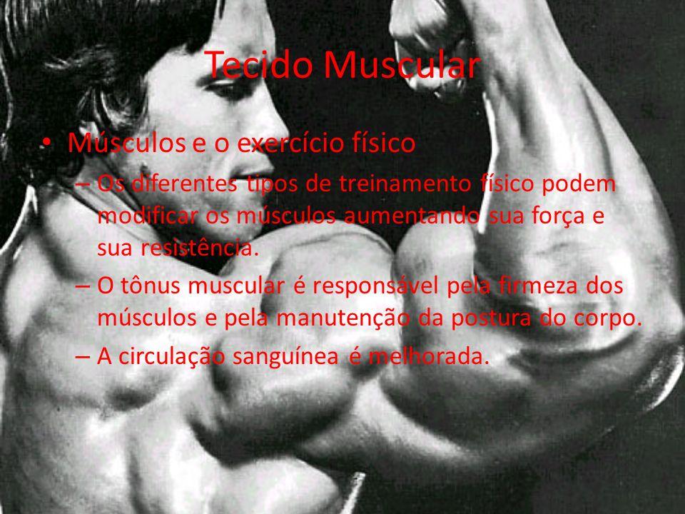 Tecido Muscular Músculos e o exercício físico