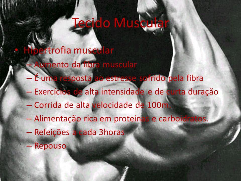 Tecido Muscular Hipertrofia muscular Aumento da fibra muscular