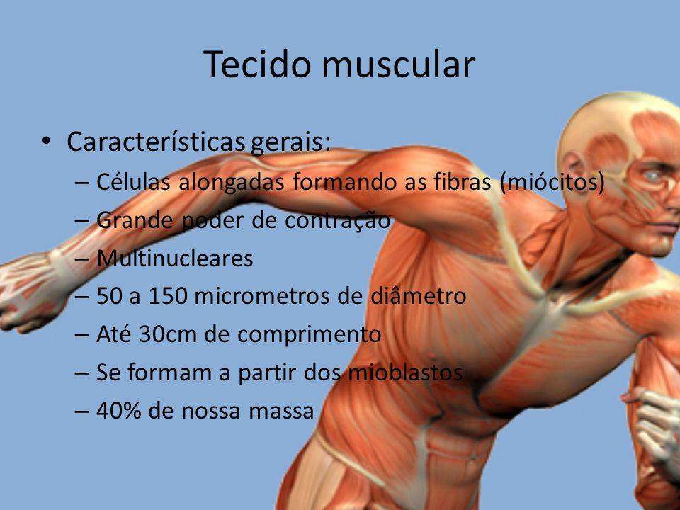 Tecido muscular Características gerais: