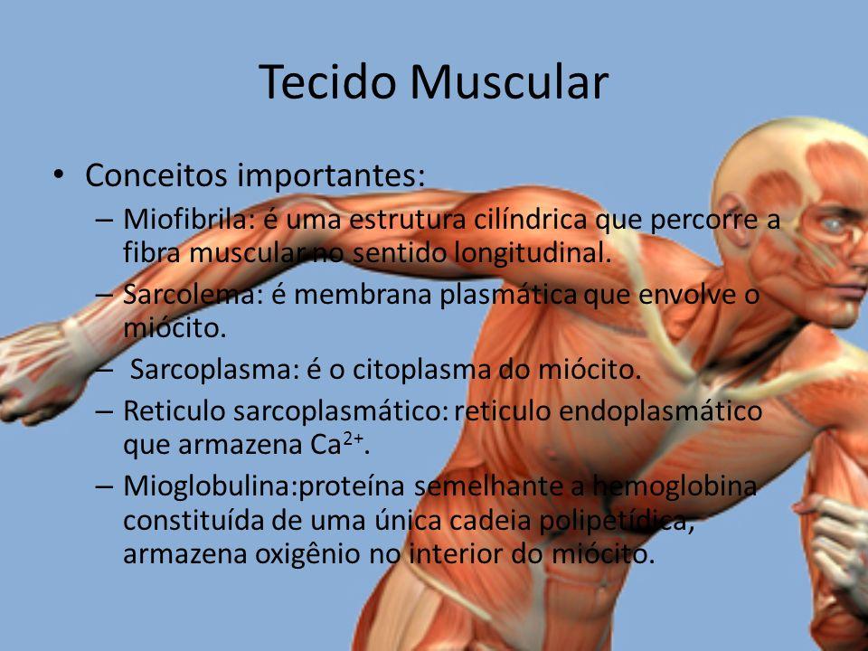 Tecido Muscular Conceitos importantes: