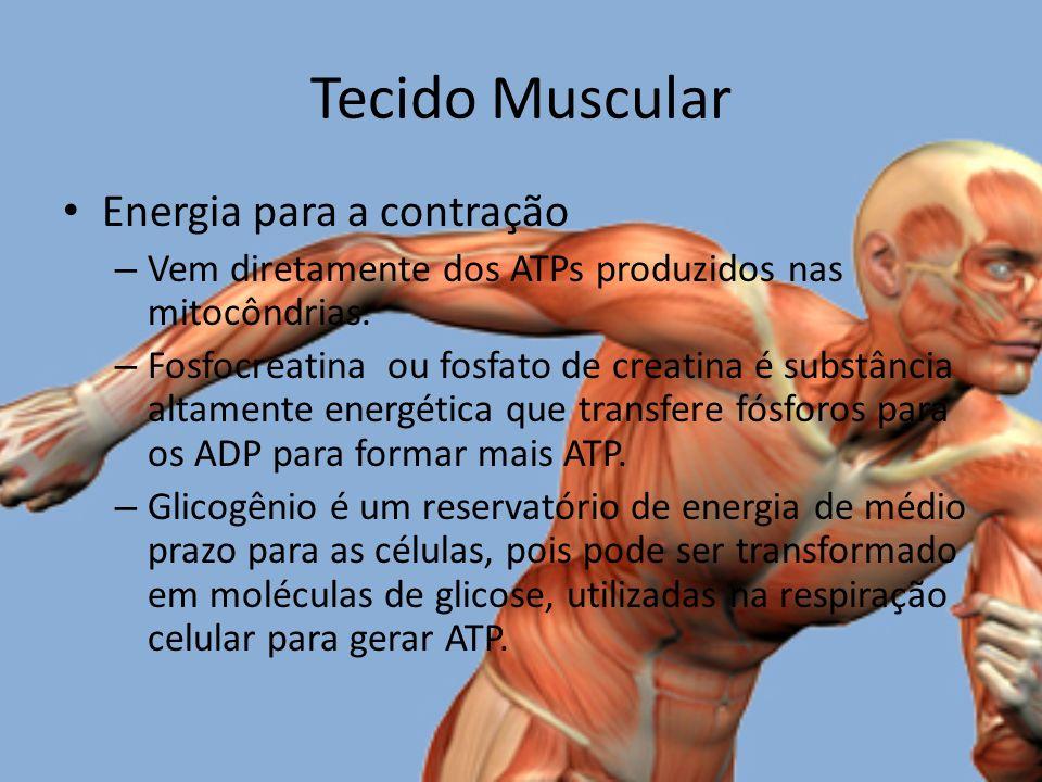 Tecido Muscular Energia para a contração