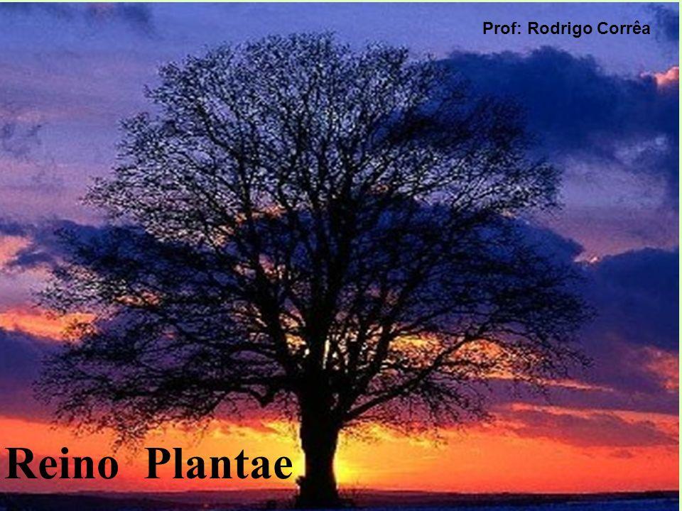 Prof: Rodrigo Corrêa Reino Plantae