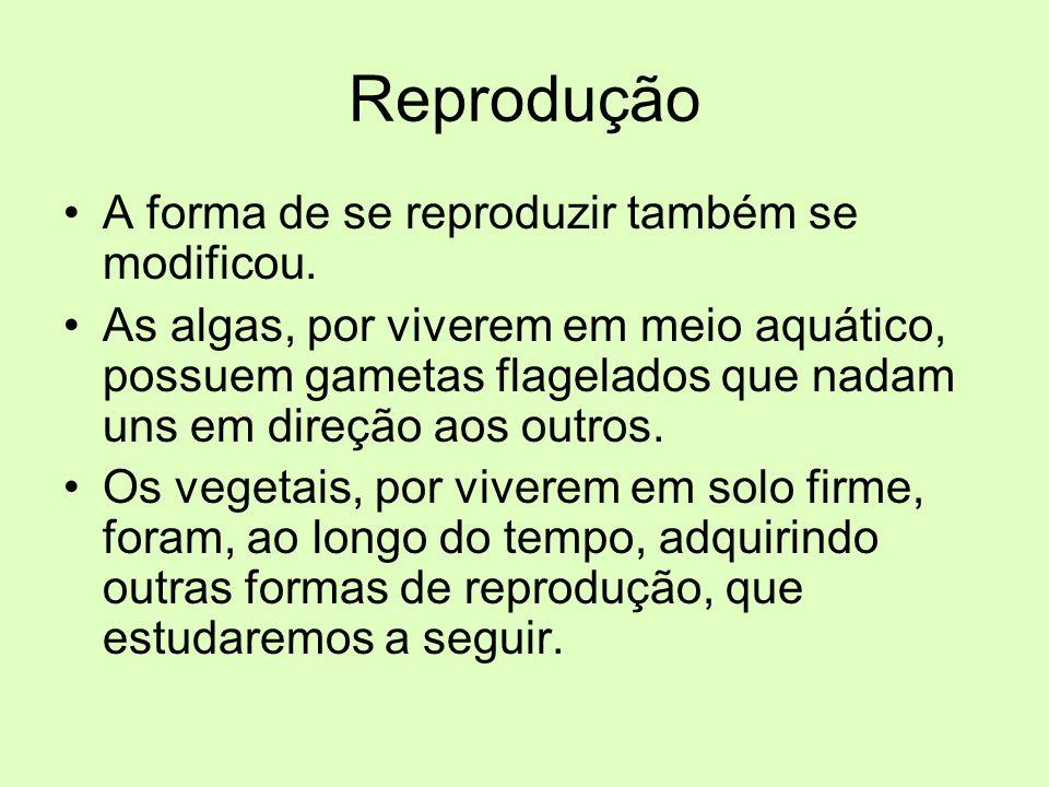 Reprodução A forma de se reproduzir também se modificou.
