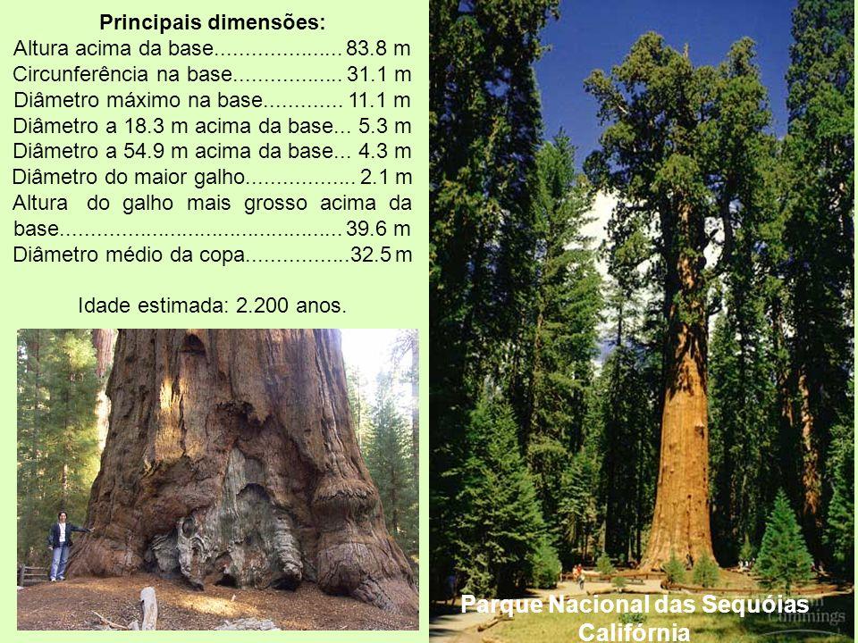 Parque Nacional das Sequóias