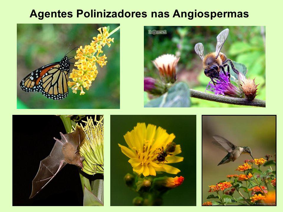 Agentes Polinizadores nas Angiospermas