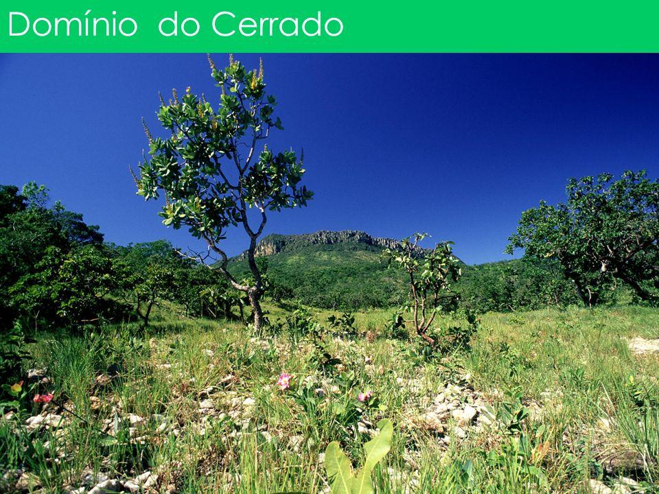 Domínio do Cerrado