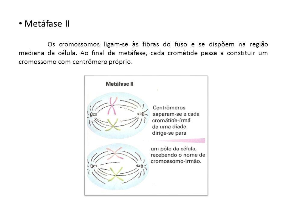Metáfase II