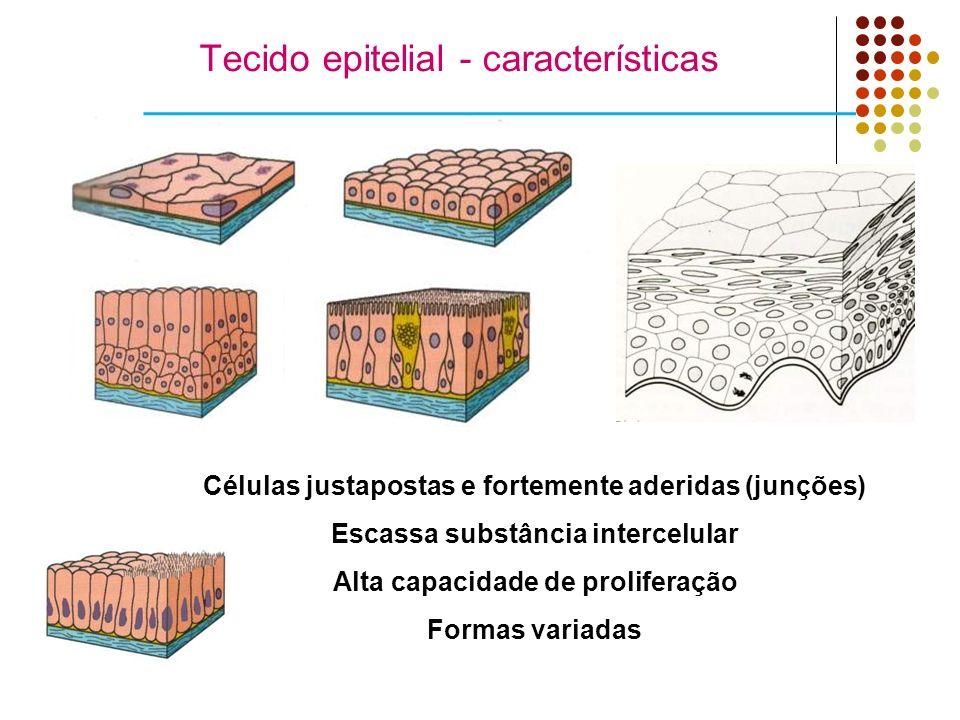 Tecido epitelial - características