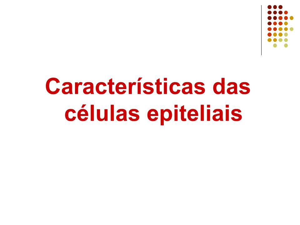Características das células epiteliais