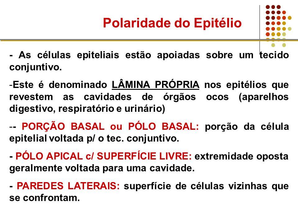 Polaridade do Epitélio