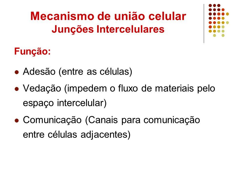 Mecanismo de união celular Junções Intercelulares