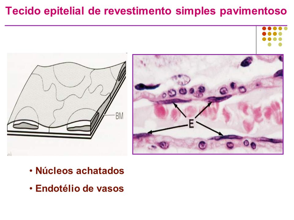 Tecido epitelial de revestimento simples pavimentoso