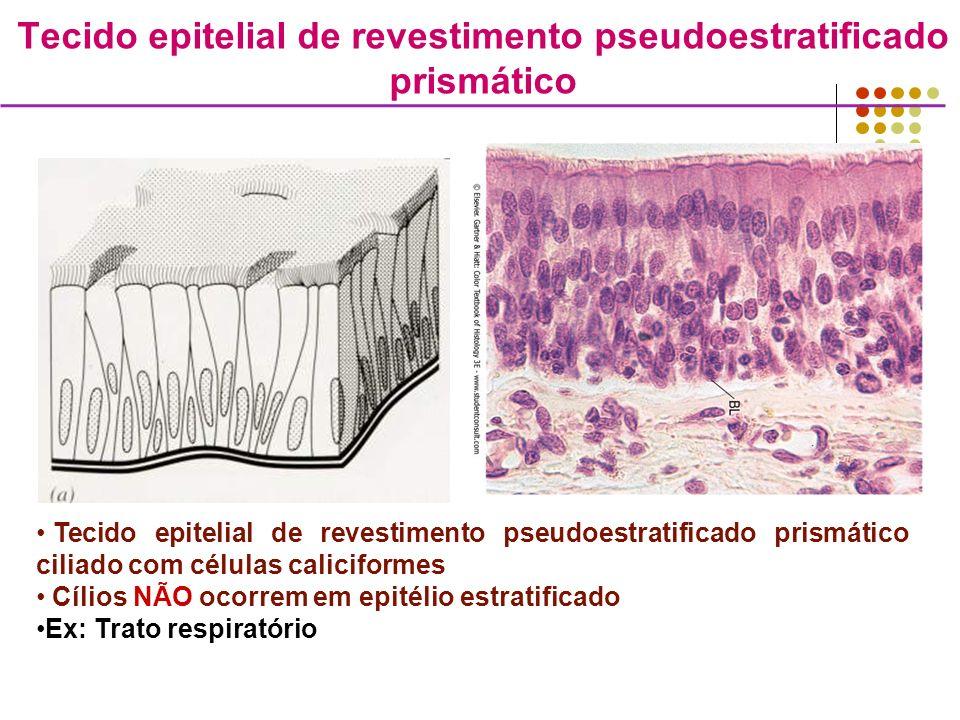 Tecido epitelial de revestimento pseudoestratificado prismático