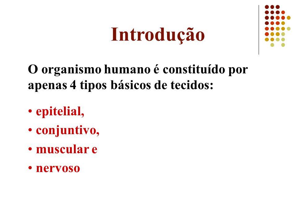 Introdução O organismo humano é constituído por apenas 4 tipos básicos de tecidos: epitelial, conjuntivo,