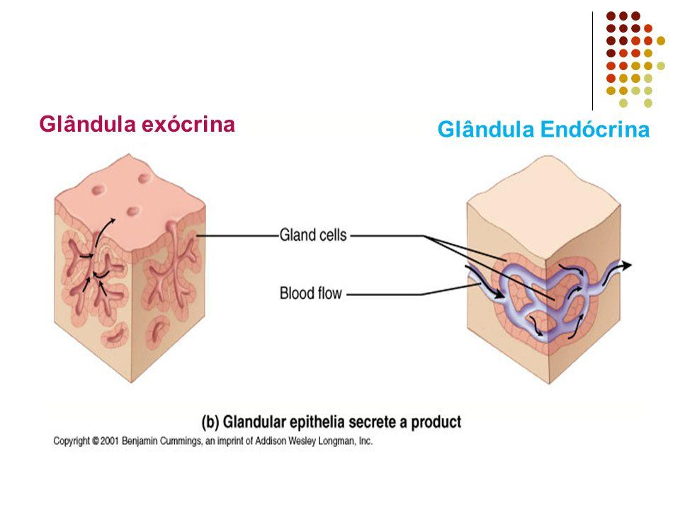 Glândula exócrina Glândula Endócrina