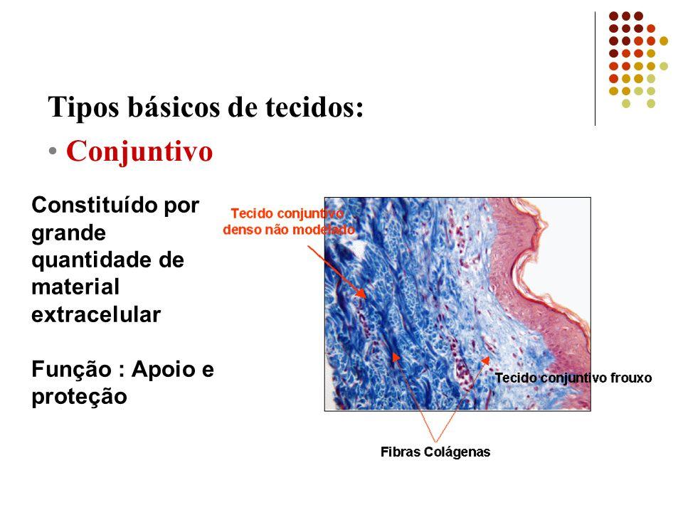 Tipos básicos de tecidos: Conjuntivo,