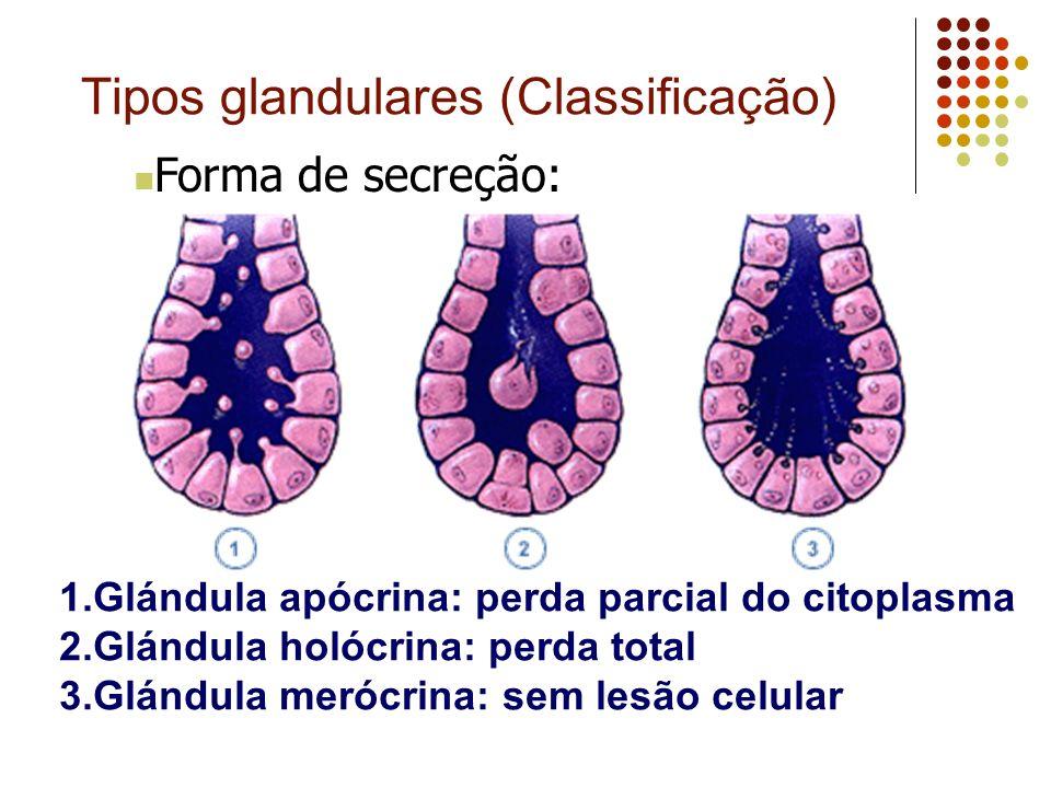 Tipos glandulares (Classificação)