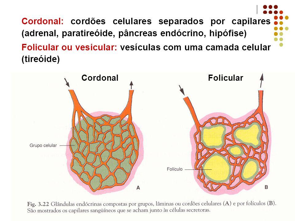 Folicular ou vesicular: vesículas com uma camada celular (tireóide)