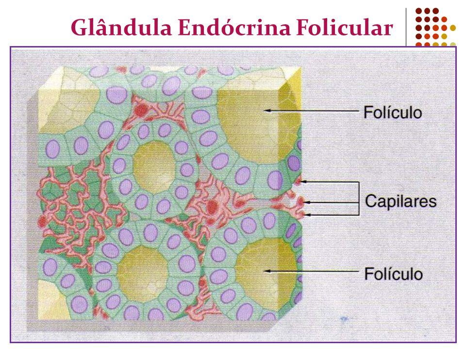 Glândula Endócrina Folicular
