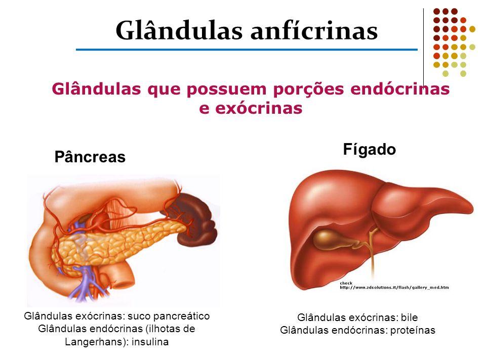 Glândulas que possuem porções endócrinas e exócrinas