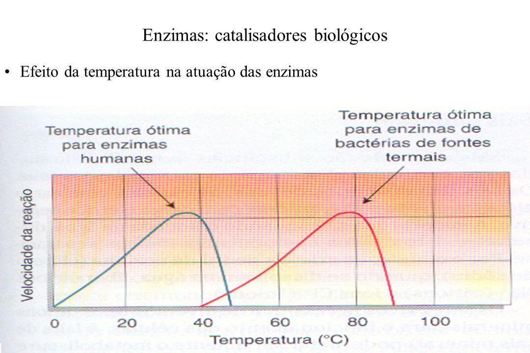 Enzimas: catalisadores biológicos