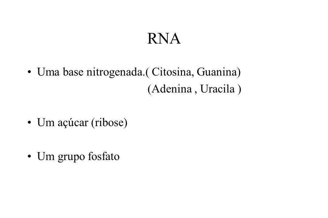 RNA Uma base nitrogenada.( Citosina, Guanina) (Adenina , Uracila )