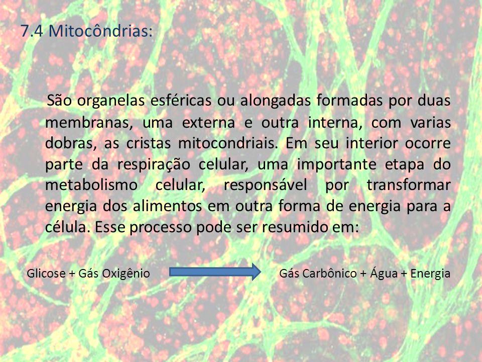 7.4 Mitocôndrias: