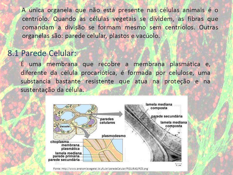 A única organela que não está presente nas células animais é o centríolo. Quando as células vegetais se dividem, as fibras que comandam a divisão se formam mesmo sem centríolos. Outras organelas são: parede celular, plastos e vacúolo.