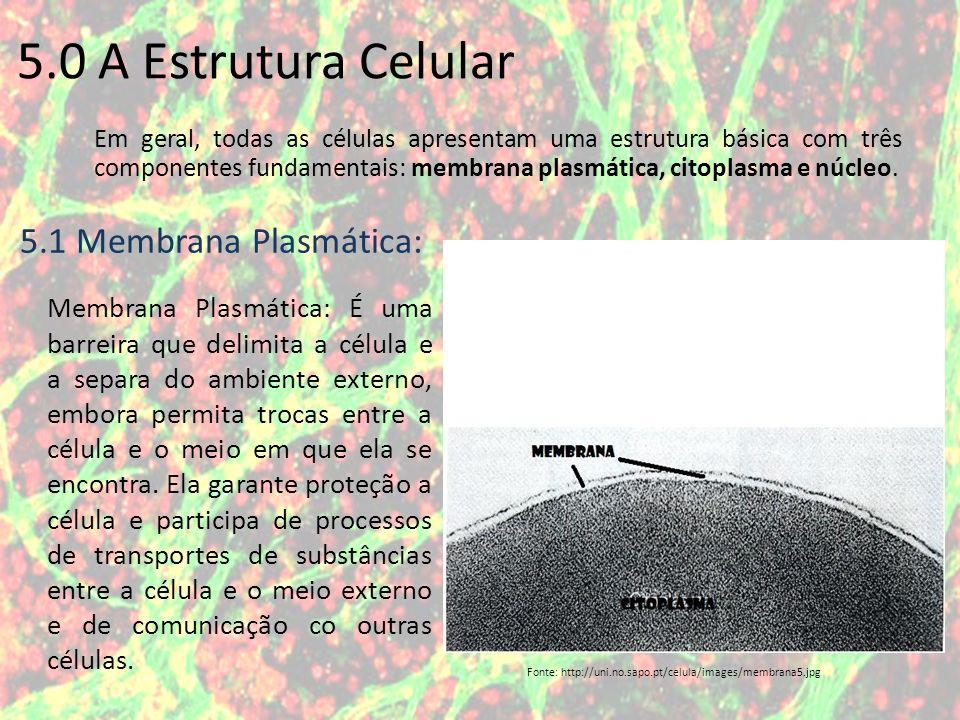 5.0 A Estrutura Celular 5.1 Membrana Plasmática: