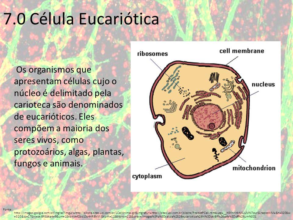 7.0 Célula Eucariótica
