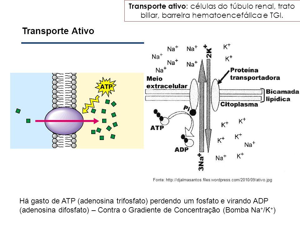 Transporte ativo: células do túbulo renal, trato biliar, barreira hematoencefálica e TGI.