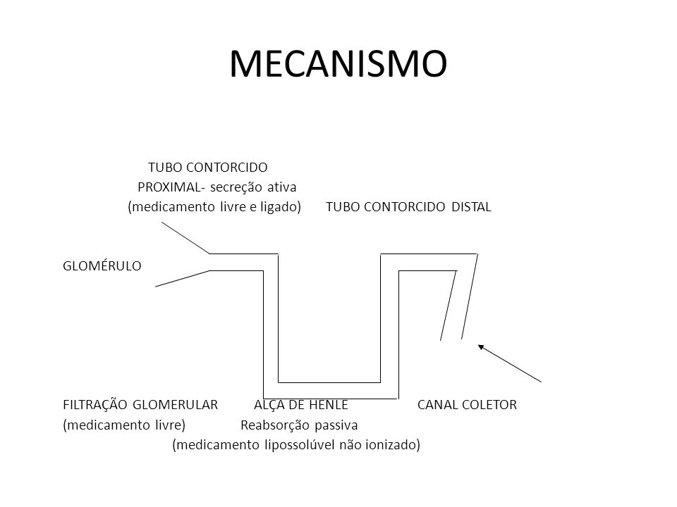 MECANISMO TUBO CONTORCIDO PROXIMAL- secreção ativa