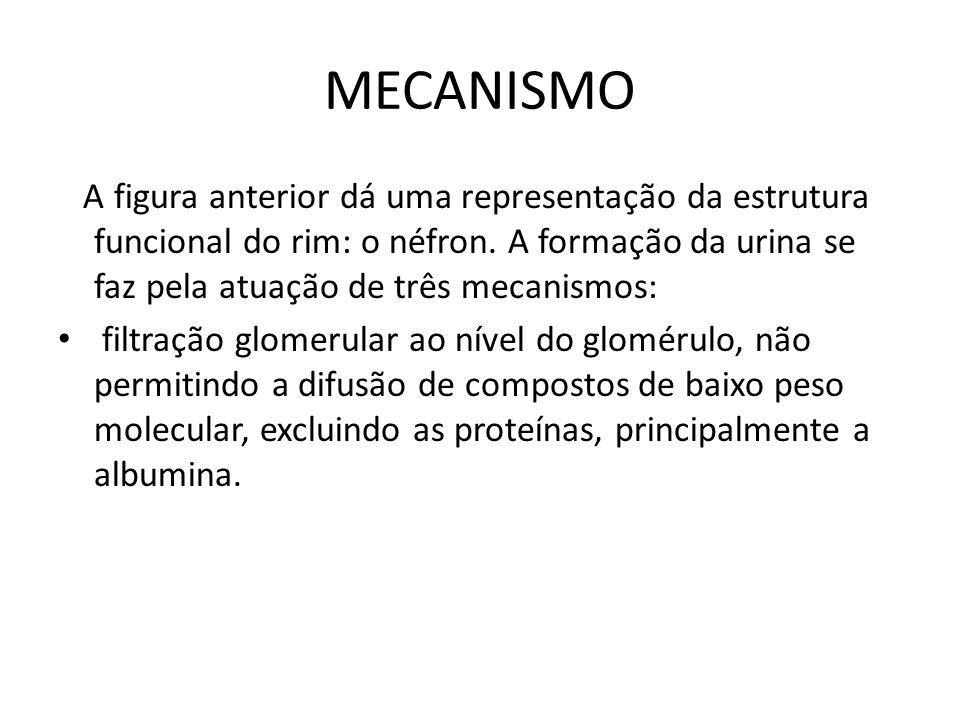 MECANISMO A figura anterior dá uma representação da estrutura funcional do rim: o néfron. A formação da urina se faz pela atuação de três mecanismos: