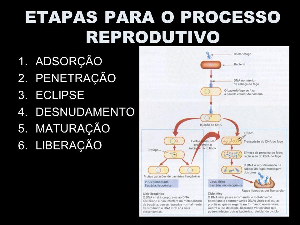 ETAPAS PARA O PROCESSO REPRODUTIVO