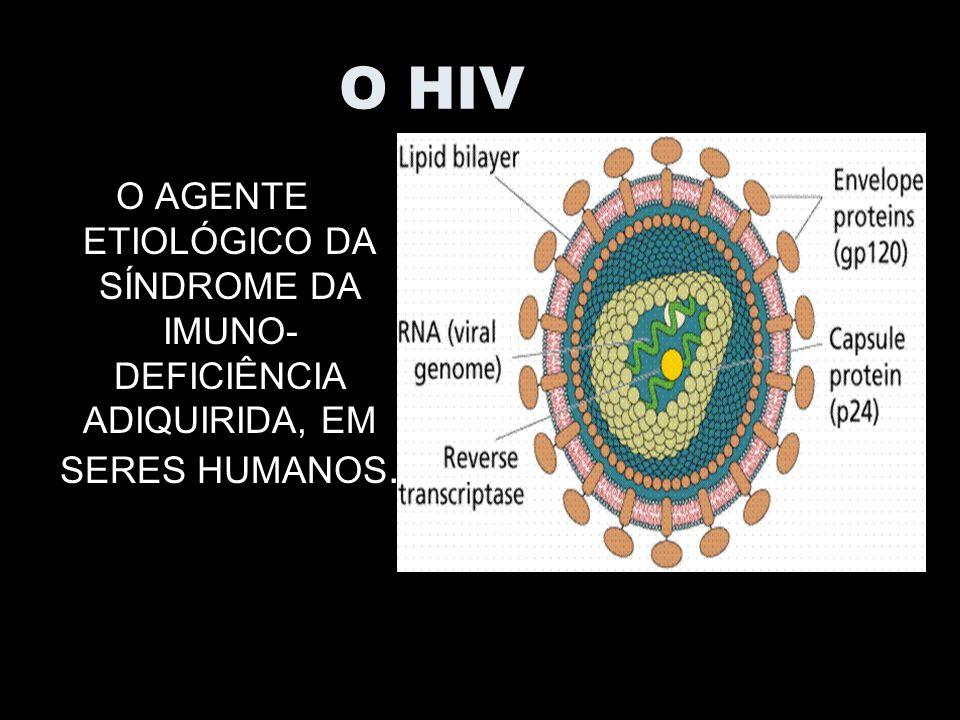 O HIV O AGENTE ETIOLÓGICO DA SÍNDROME DA IMUNO-DEFICIÊNCIA ADIQUIRIDA, EM SERES HUMANOS.