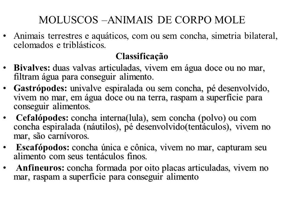 MOLUSCOS –ANIMAIS DE CORPO MOLE