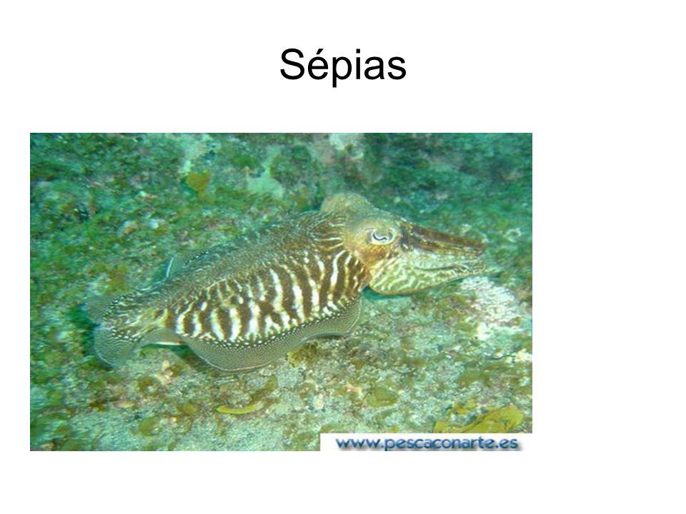 Sépias