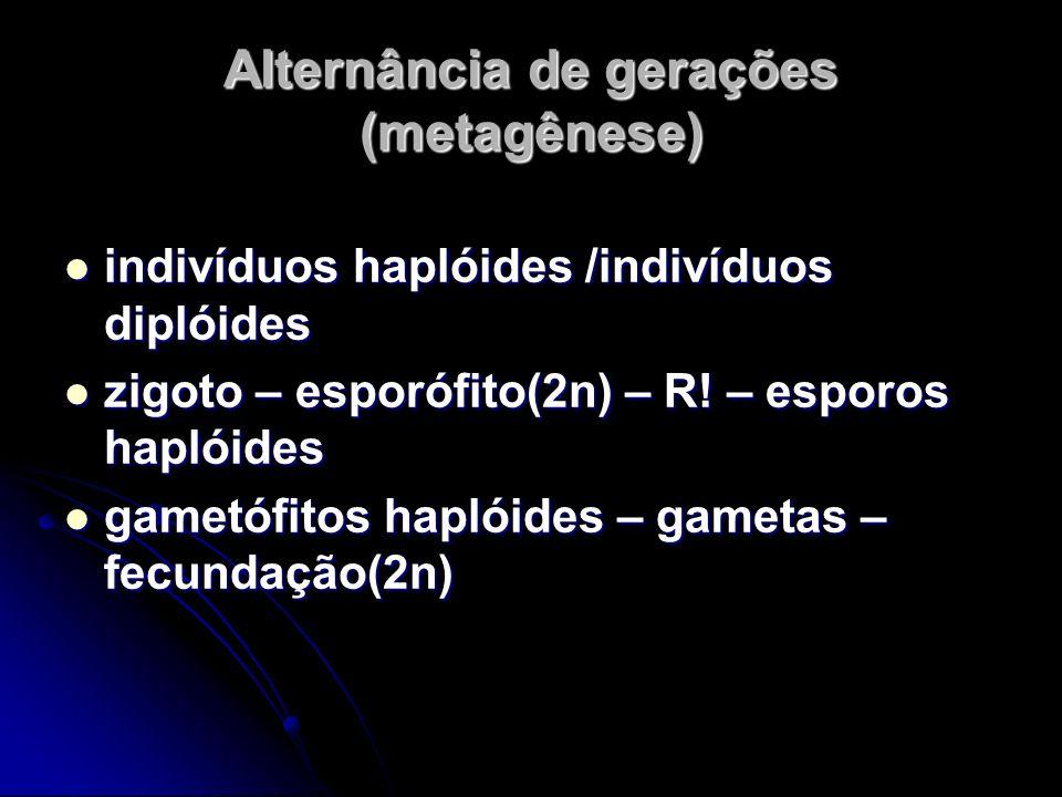 Alternância de gerações (metagênese)