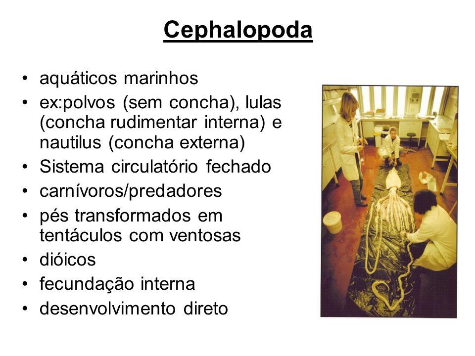 Cephalopoda aquáticos marinhos