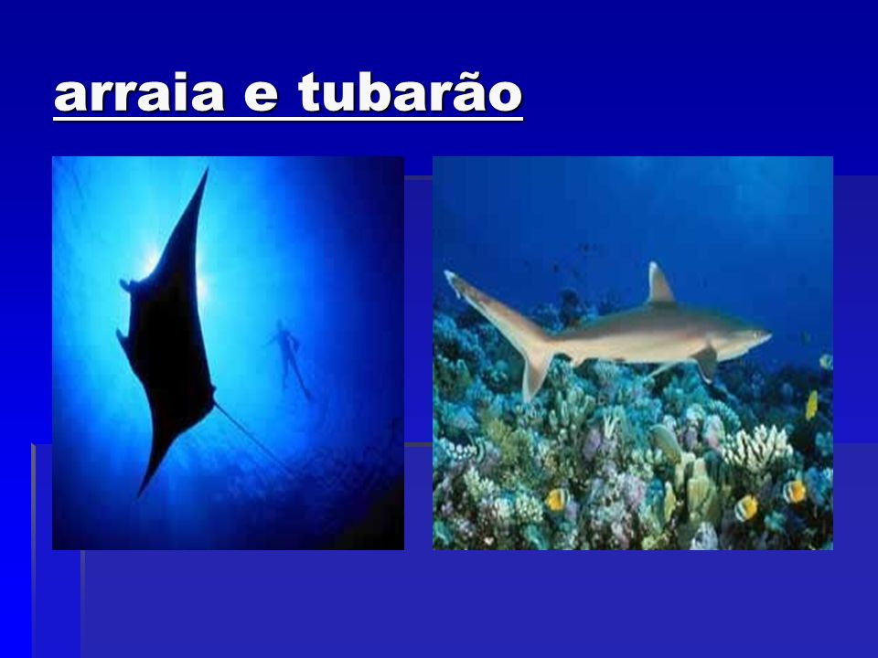 arraia e tubarão