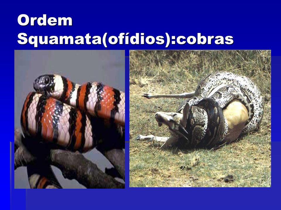 Ordem Squamata(ofídios):cobras