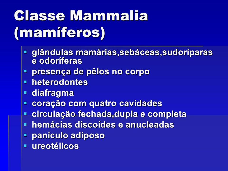Classe Mammalia (mamíferos)