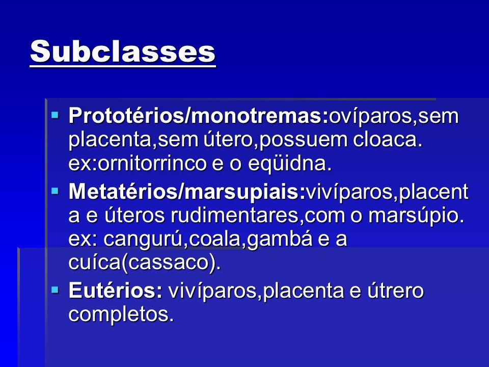 Subclasses Prototérios/monotremas:ovíparos,sem placenta,sem útero,possuem cloaca. ex:ornitorrinco e o eqüidna.