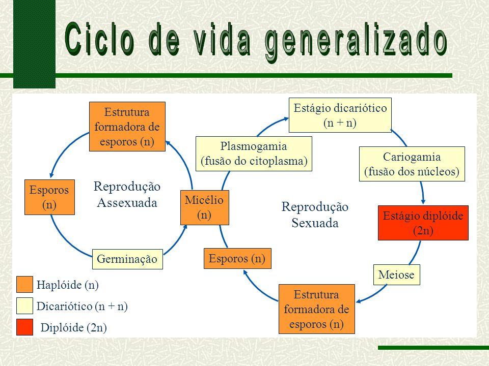 Ciclo de vida generalizado