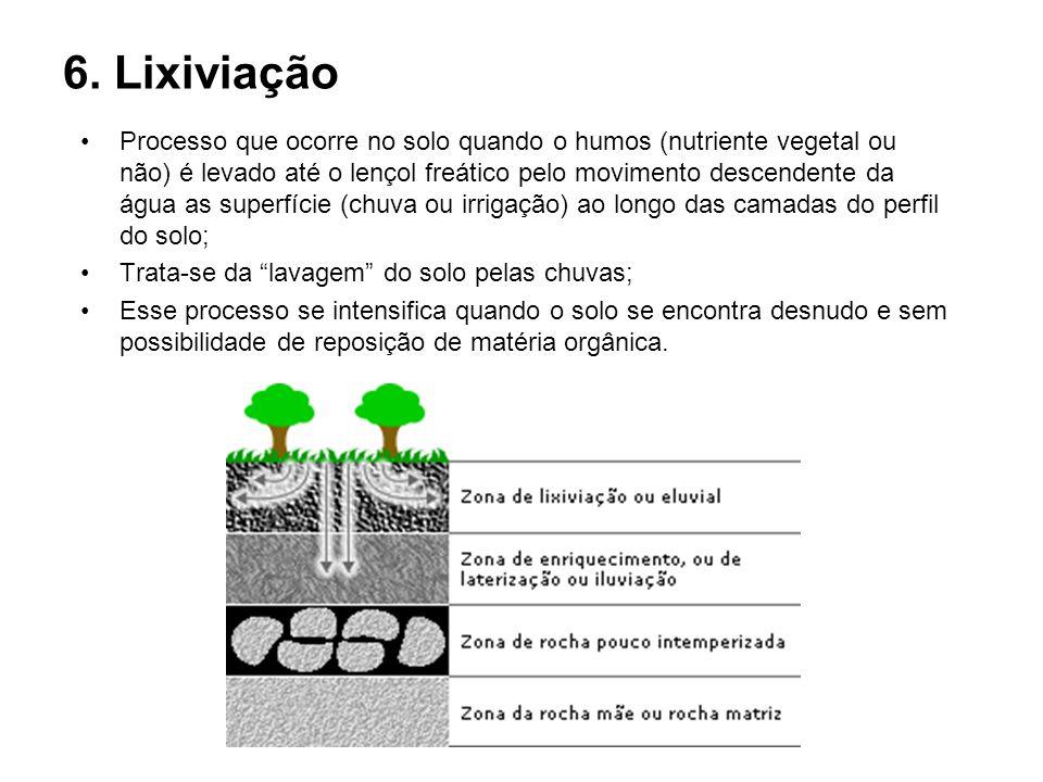 6. Lixiviação