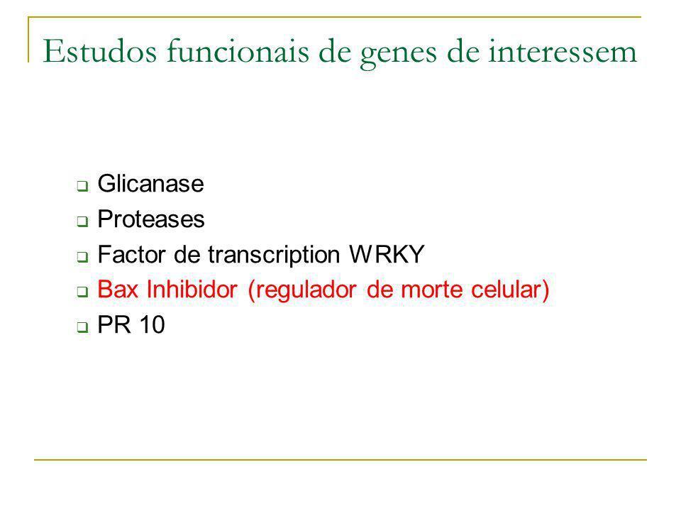 Estudos funcionais de genes de interessem